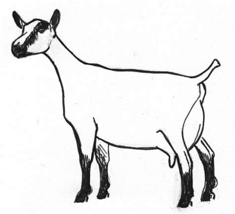 goat head coloring page goat clipart dairy goat pencil and in color goat clipart