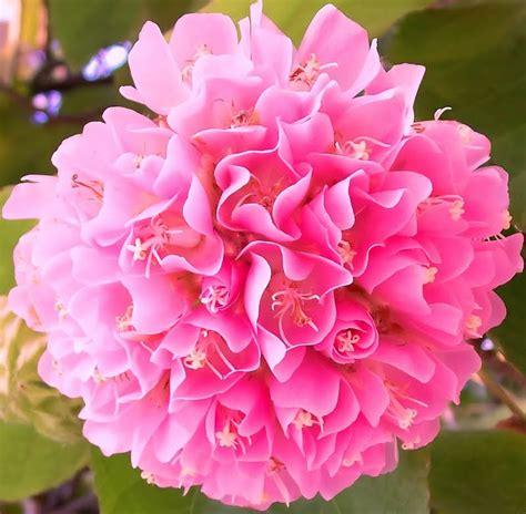 imagenes flores jasmin lindas march 2013 s m carinho scraps 2013 march recados