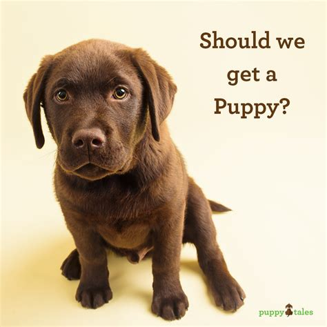 should i get a puppy is a puppy right for you finding the right for you puppy tales