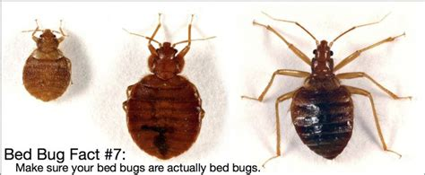 bed bug look alike 35 best bed bug awareness week images on pinterest