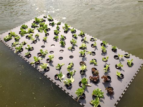 Pond Planter by Pond Planter Floaters Wetland Plants This Floating