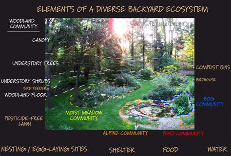 the backyard ecosystem natural landscaping gardening