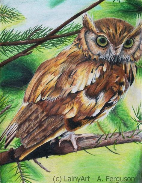 what color are owls 17 best images about owl sketches on great