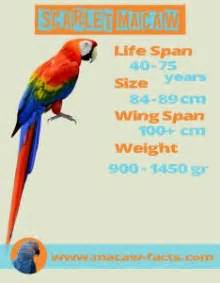 scarlet macaw red macaw ara macao macaw facts