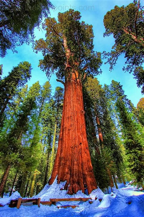 general sherman tree sequoia national park in california the general sherman tree sequoia national park