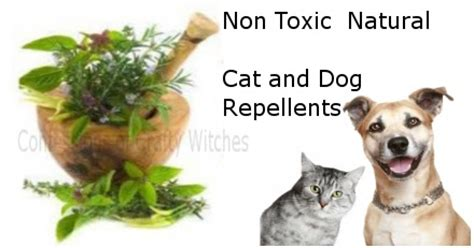 new choices in healing for dogs cats herbs acupressure homeopathy flower essences diets healing energy books herbal health care non toxic cat and repellents