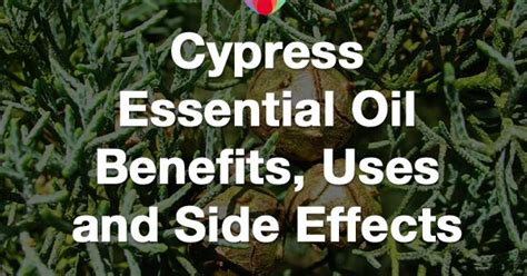 Fusion Health Detox Side Effects by Cypress Essential Benefits Uses And Side Effects