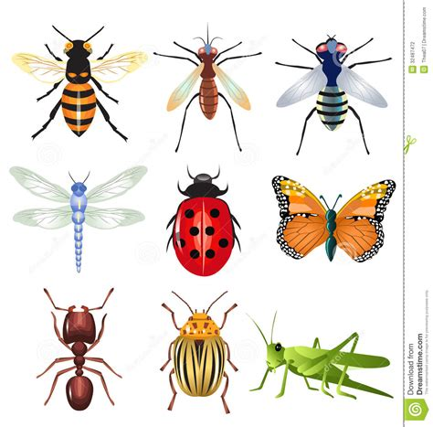 insectanatomy free insect animal pictures gallery set of vector insects stock vector illustration of icons