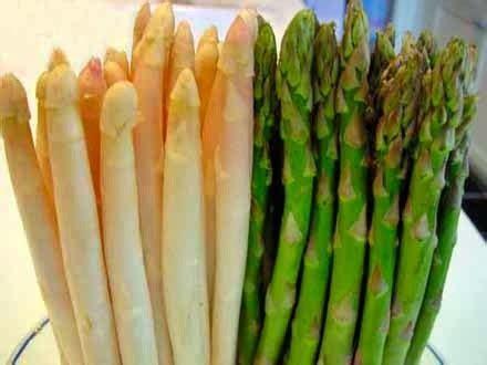 Bibit Sayuran Asparagus budidaya tanaman asparagus budidayaku
