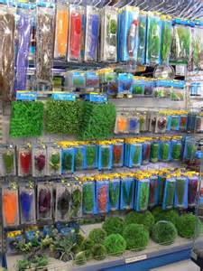 yourself why Carine is the best pet fish supplies store in Tauranga