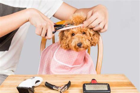 cortar el pelo a los perros 191 es bueno cortar el pelo a los perros en verano