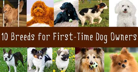 best breeds for time owners best breed for time pet owner breed