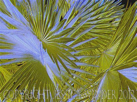 patterns of nature artist palm leaves photographic salmagundi