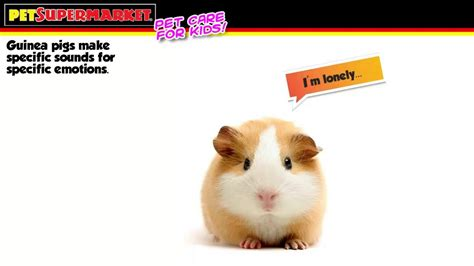 7 Tips On Caring For Pigs by Guinea Pig Care For