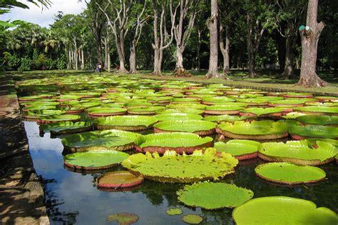 Mauritius Botanical Garden with Plemousses Botanical Garden In Mauritius Photos News Boomsbeat