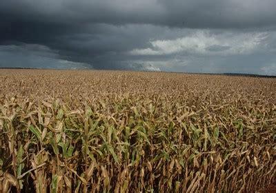ms de 400 mil jubilados cobrarn 45 de aumento en septiembre plantio de milho atinge 45 da 225 rea prevista em mato