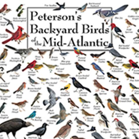 duncraft peterson backyard birds posters