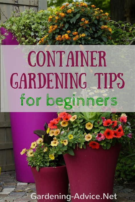 garden tips container gardening tips for beginners