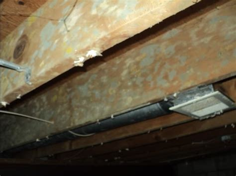 Disinfecting Basement Walls And Floor With - picture gallery moldlab l l c