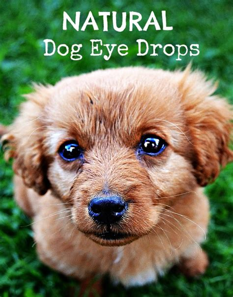 can you use eye drops on dogs eye drops green