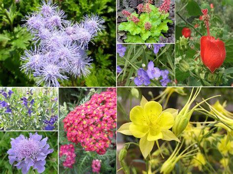 perennials for sun shade sun gardens pinterest