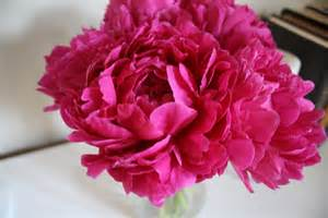 pink peonies dwell and tell pink peonies