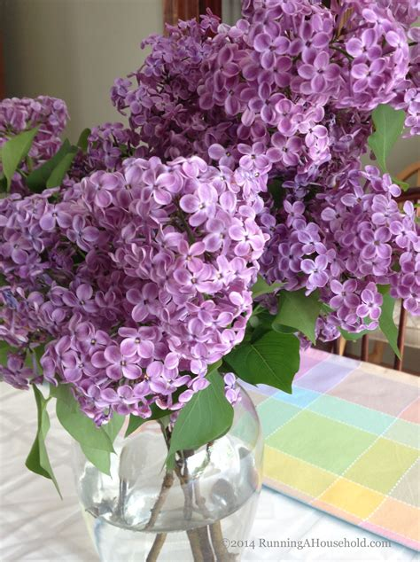 Yuri Glass Cleaner Fresh Lilac what s in your vase flowers for your home