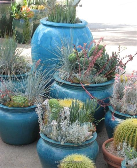 succulent container gardens debra baldwin 44 best images about show to on gardens