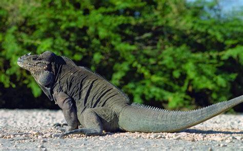 imagenes amorosas de cumpleaños fotos de reptiles fotos bonitas de amor im 225 genes