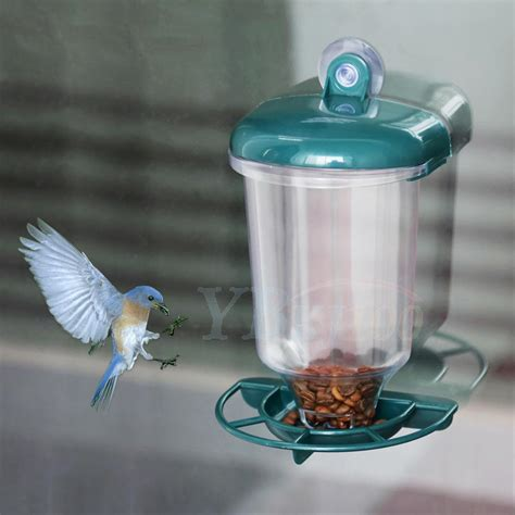 bird feeder suction cup window glass perspex hanging clear