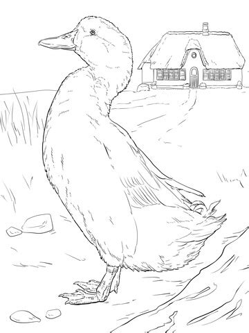 Domestic Duck coloring page | Super Coloring