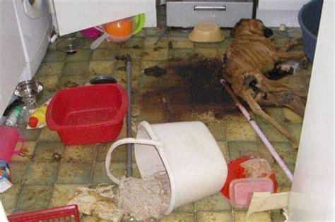 katie doors found dead mulher 233 condenada por deixar cachorro morrer de fome na