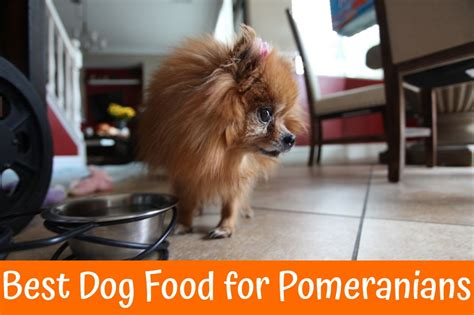 pomeranian foods to eat review of best food for pomeranians us bones
