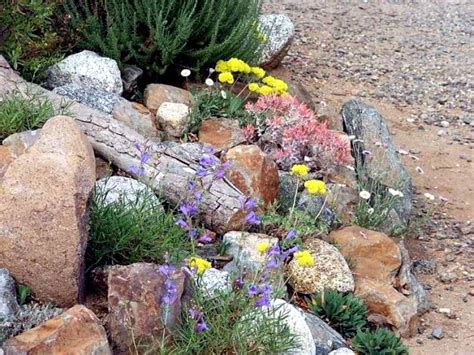 Creating A Rock Garden Where Plants Are Best Placed Creating A Rock Garden
