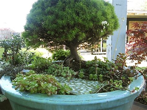 Growing Wood Miniature Gardening And Bonsai The Mini Mini Garden Ideas