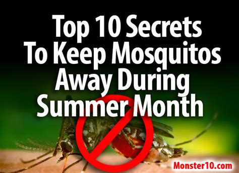 how to keep mosquitoes away in backyard how to keep mosquitoes away in backyard 28 images 17 best images about outdoors on