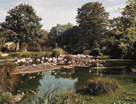 Zoologischer Garten Basel Ag by Zoologischer Garten Basel Neue Etoscha Anlagen August