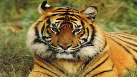 Wild Animals Wallpapers Free Download Free Pics Of Animals