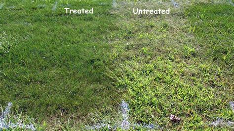 Barnyard In Your Backyard Minneapolis Lawn Fertilization Amp Weed Control Services