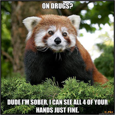 Red Panda Meme - shady drug dealer red panda memes quickmeme
