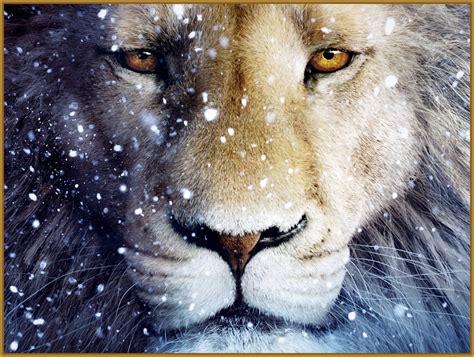 imagenes full hd de leones imagenes de leones para fondo de pantalla de celular