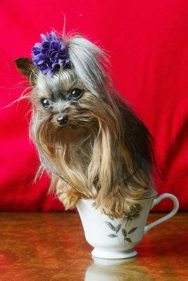 chamomile safe for cats chamomile treatments for dogs popsugar pets
