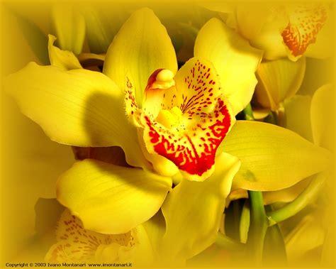 orchidea foto fiore orchidea 1280x1024 foto sfondi desktop wallpaper