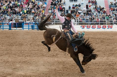 horses that buck the story of chion bronc rider bill smith the western legacies series books stories tagged with quot bull quot tucsonsentinel