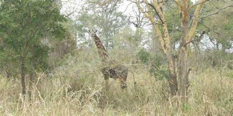 best time to visit zanzibar best time to visit tanzania and zanzibar tanzania safari