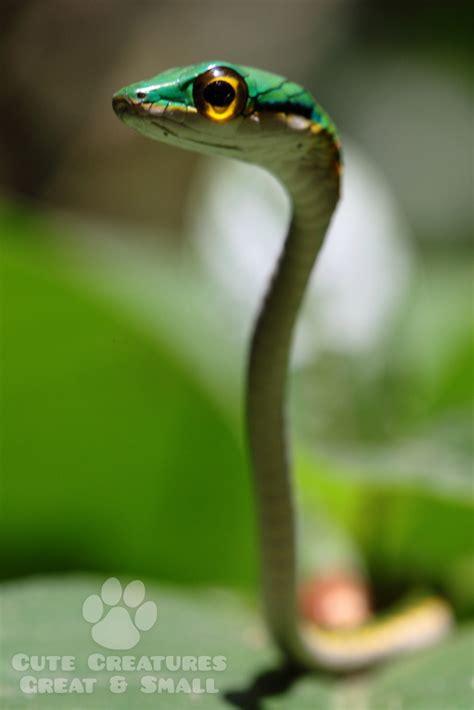 cutest snake   world