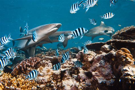 imagenes animales acuaticos y terrestres definici 243 n de animales terrestres y acu 225 ticos 187 concepto