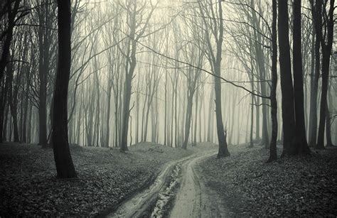 Woodland Wall Mural black and white forest pathway wall mural
