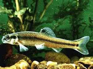 Fresh Water Fish Images Freshwater fish pictures