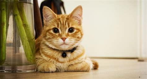 minicuentos de gatos y como eliminar el olor a pis de gato video tutorial petdarling com